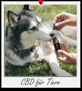 CBD für Tiere Hanfok