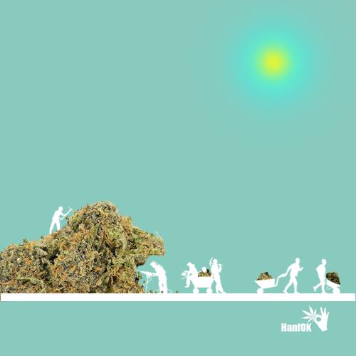 Cannabis Bergbauer