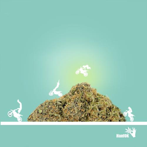 Cannabis Motorcross
