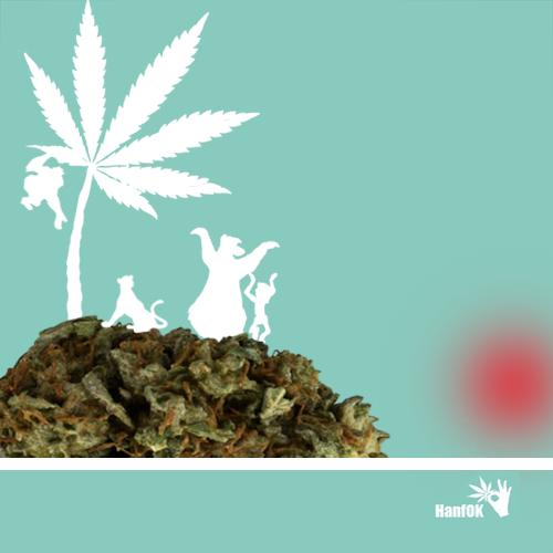 Cannabisinsel &Dschungelbuch