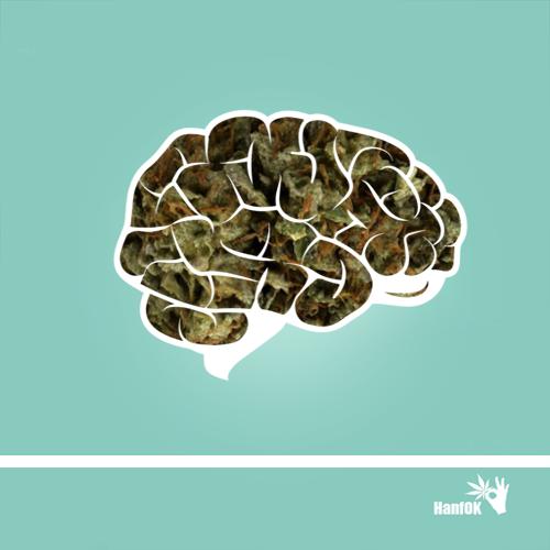 Cannabisgehirn