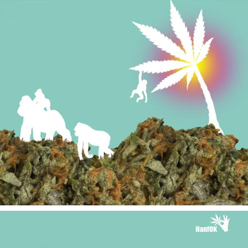 Cannabisberge & Gorilla Familie
