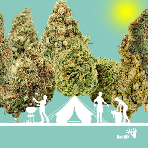 Cannabiswald und Grillen