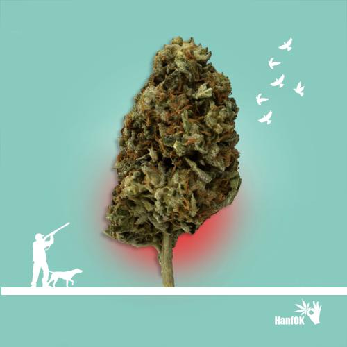 Cannabisbaum Jäger und die Vögel