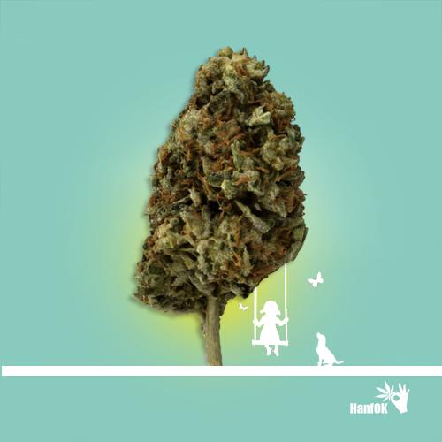 Mädchen schaukelt Cannabisblüte