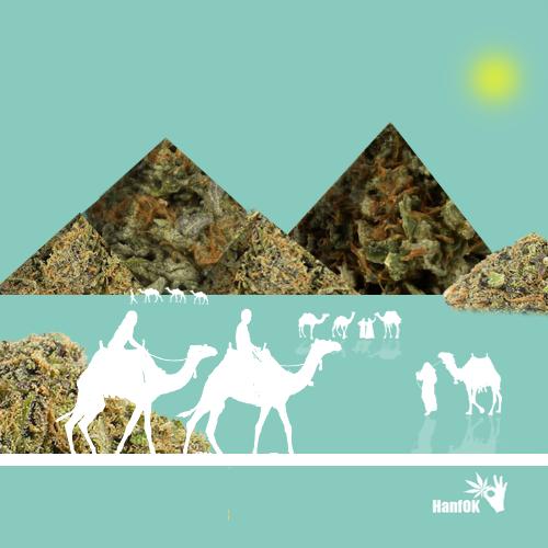 Cannabis Phyramiden