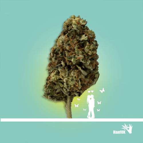 Cannabisbaum Verliebtespaar