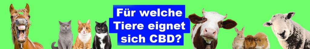 cbd für tiere banner